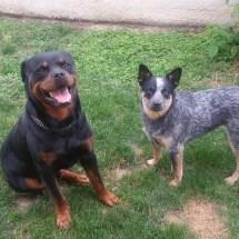 Nina et son copain Ike