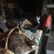 les chattes et Ninon