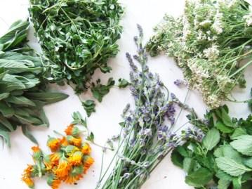 Plante vindecătoare — microrecoltă din grădină