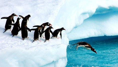 pinguinos
