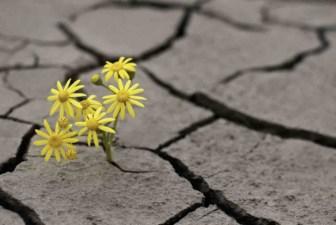 flor-sentecia