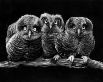 three_owls_by_aminorcatastrophe-d45lhtw