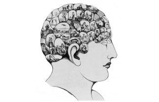 brain-right