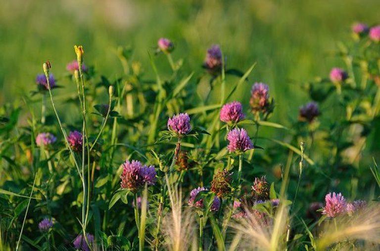 Как вывести пырей с огорода, дачного участка навсегда?