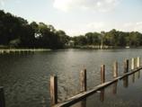 indian river head water, spillway, millsboro, ponds in delaware, sussex county, bird watching, bait fish, brackish water, lsd, lower slower