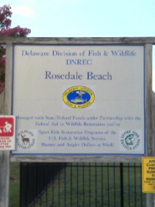 gull point, rosedale beach, delaware state boat ramp, indian river access, blue claw crabs, kayak fishing, wake boarding, delaware, sussex county, indian river bay, old inlet, brackish water fishing, mummichug minnows, killifish, flounder, striped bass, croaker, spot