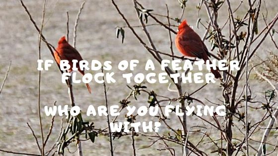 If Birds of a Feather Flock Together Who Are You Flying With?