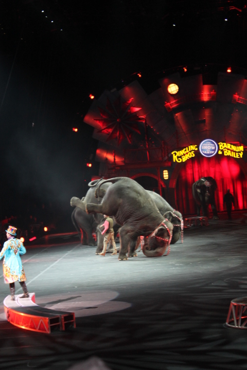 Circus Feb 2015 022