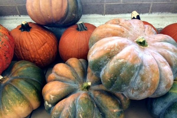 Delaware County PA Area Weekend Events and Fall Family Fun 10/19 – 10/21