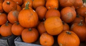 Delaware County PA and Surrounding Area Weekend Events and Fall Family Fun 10/12 – 10/14