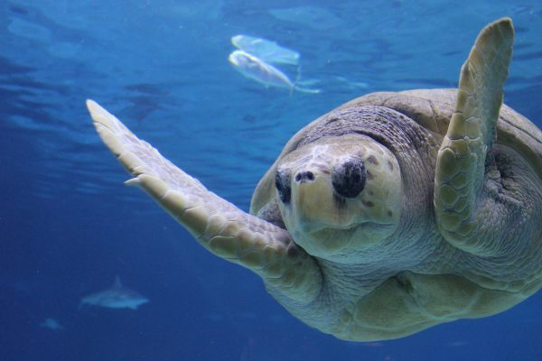 "Take Advantage of ""One Kid Free"" Family Days Now through February 14th at Adventure Aquarium in Camden, NJ"