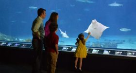 Register for a FREE Pre-K Kid's Adventure Pass for Adventure Aquarium and Take Advantage of the Upcoming Pirates AHOY!