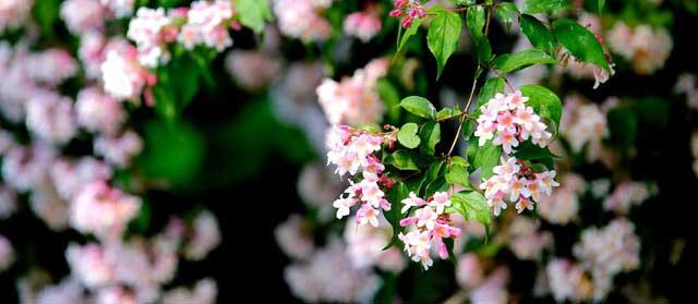 Aménagez votre jardin par un paysagiste professionnel