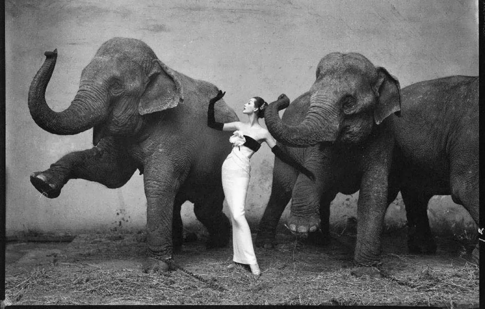 Domiva with Elephants, Richard Avedon
