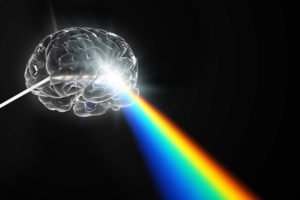 Prism brain