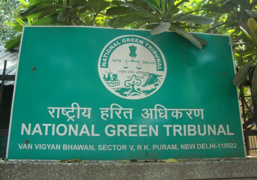 NGT Issues Directions for Immediate Deconcretisation of Trees