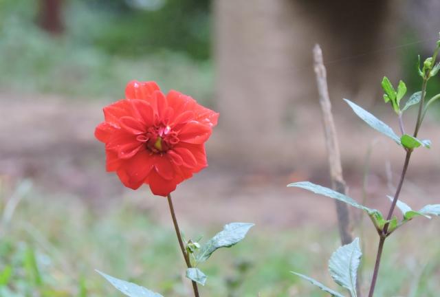 environment-day-greetings-delhi-greens