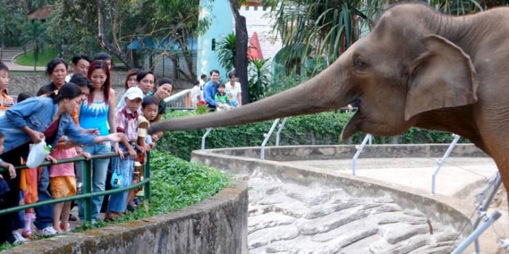 world-elephants-day-delhigreens
