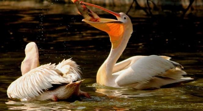 Top Ten Bird Watching Sites in Delhi