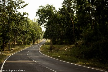 Teak wood or Sagaun Jungles forest in Madhya Pradesh & Chhattisgarh.