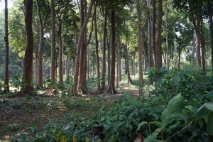 Radhanagar Beach Forest