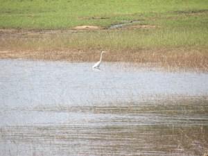 Periyar cranes