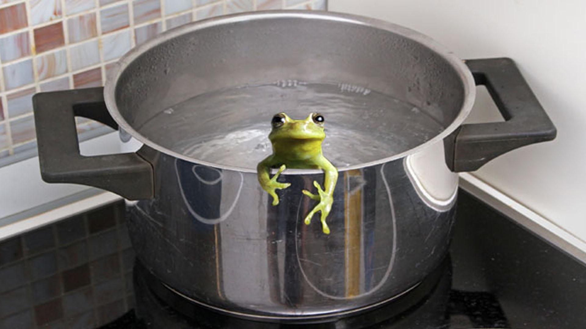 frog_boiling-pot