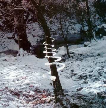 Andy Goldsworthy – Icicle Spiral (Treesoul) – Dumfriesshire, Skotsko, po roce 1985