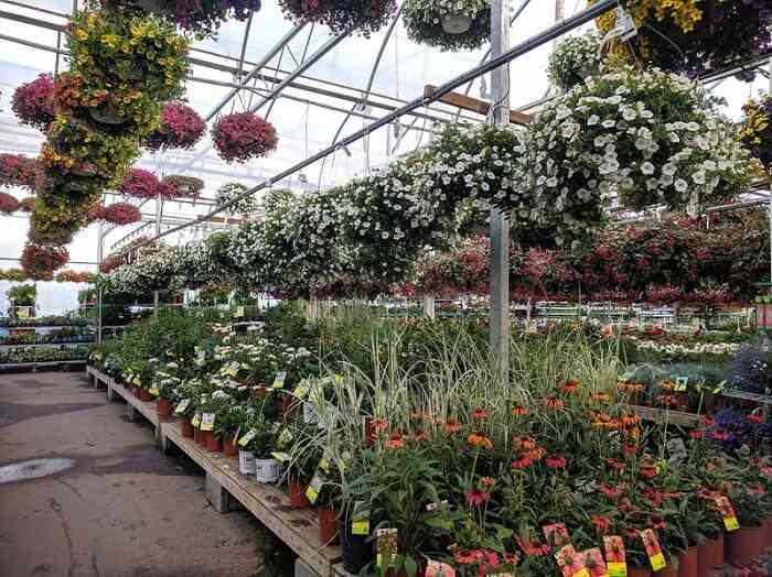 flower pot - Terrace Garden Decoration Ideas