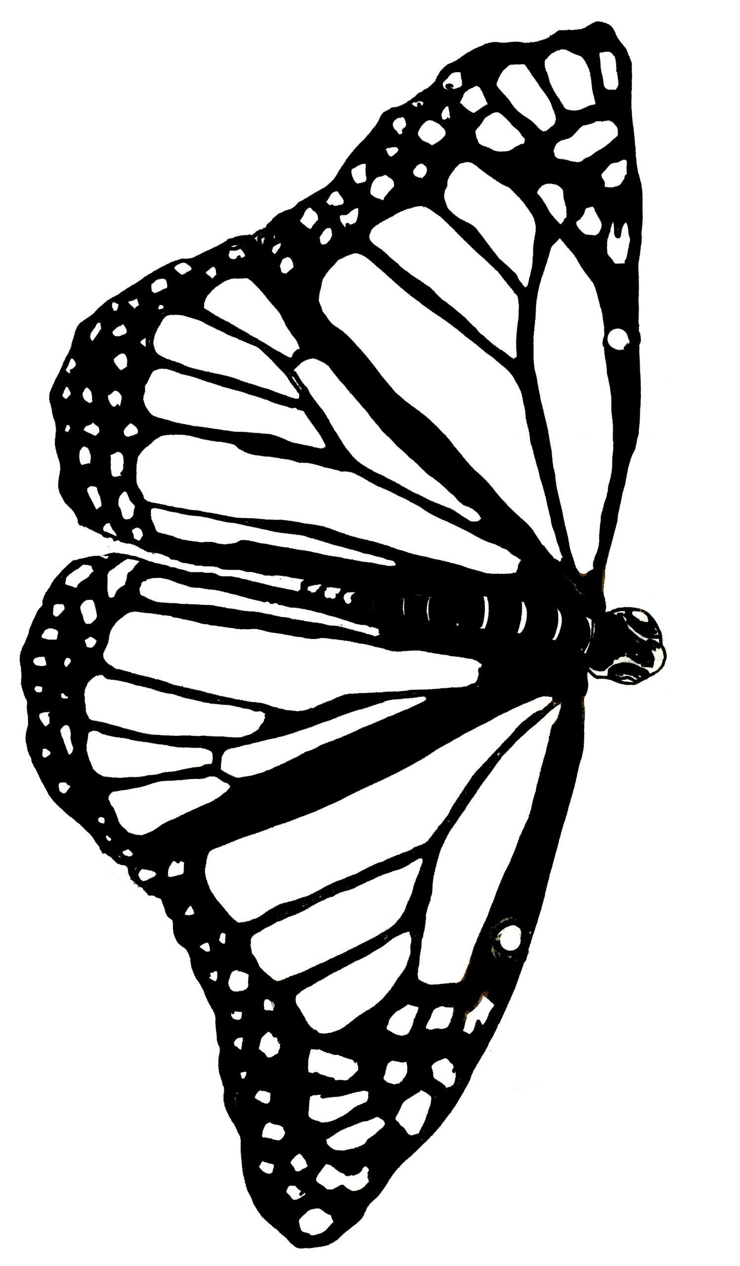 Shrinky Butterfly Template
