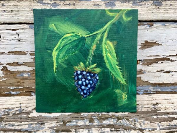 blackberry on a vine