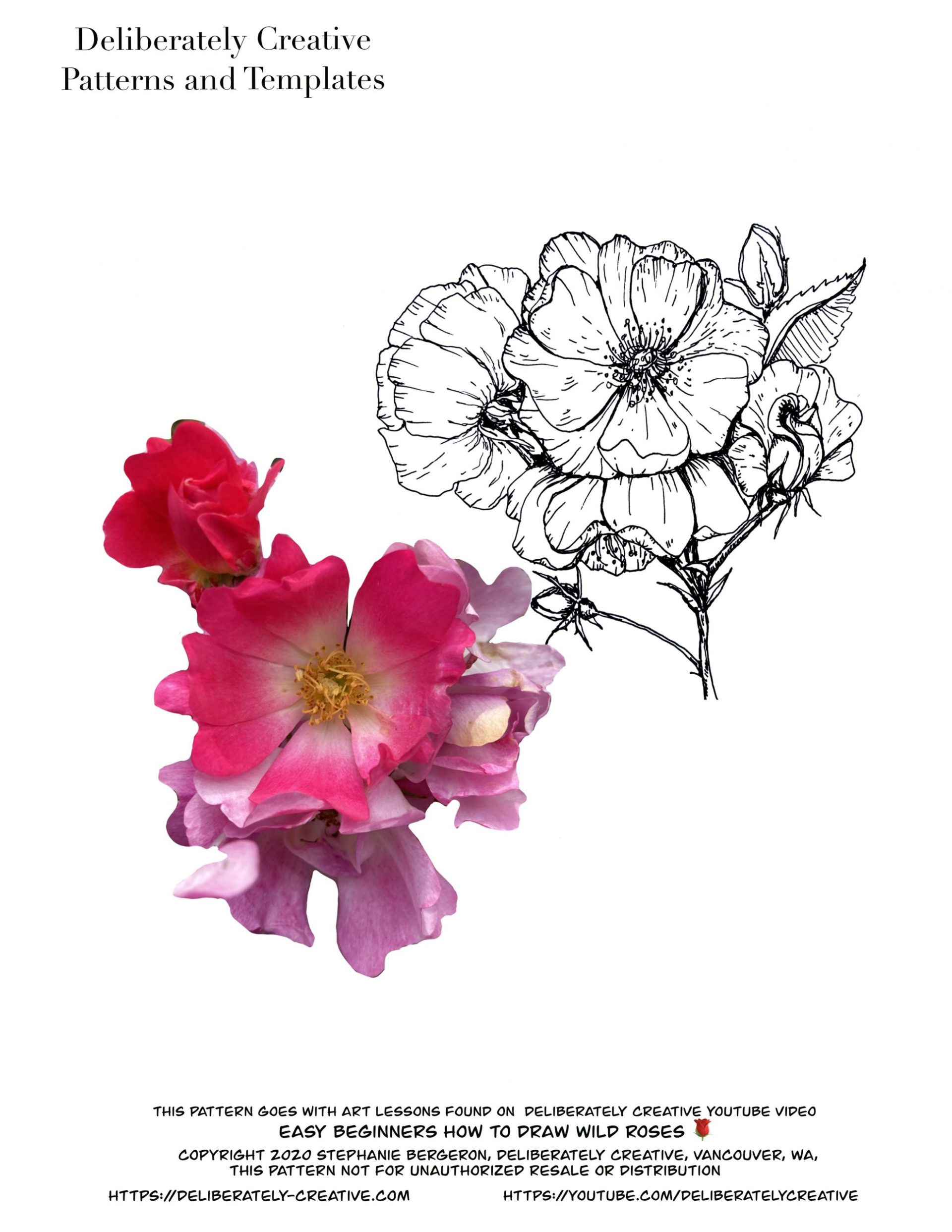 Photo and line art of wild roses