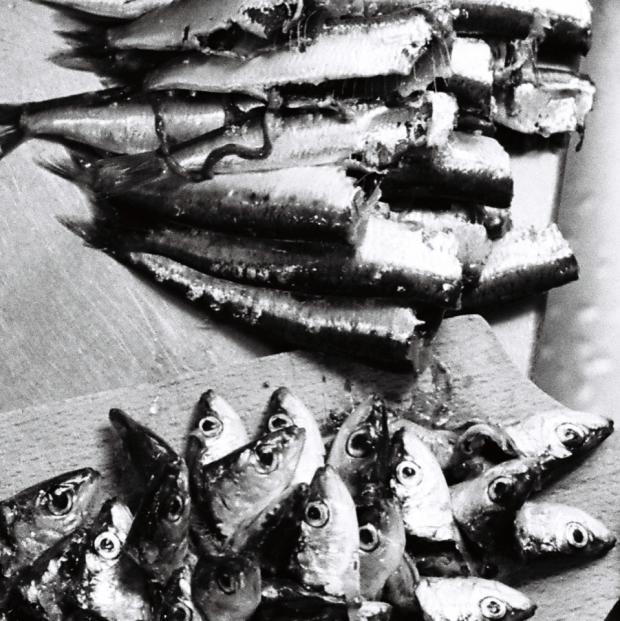 Sardines - Se souvenir de Jonas (Microscopies) ©Frédéric Teillard