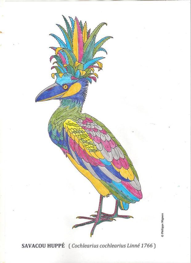 Le savacou huppé colorié par l'arrière-grand-père de Léa Lefol de la Rémige, sur un dessin original de Philippe Mignon