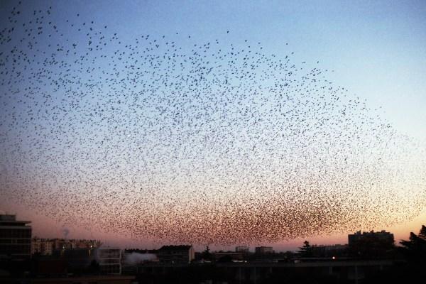 Birds © Gregg Ellis