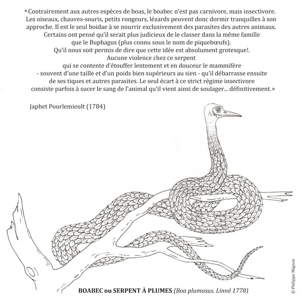 Coloriage - Le boabec ou serpent à plumes ©Philippe Mignon