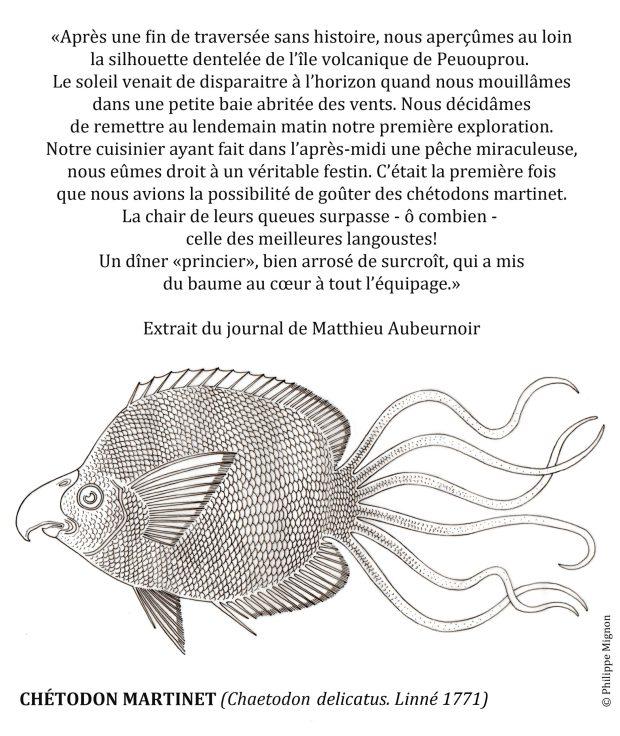 Coloriage - Le chétodon martinet © Philippe Mignon