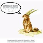 """""""Éléphasme, rhinolophon, caméluche et autre merveilles de la nature"""", paru aux éditions Les Grandes Personnes ©Philippe Mignon"""