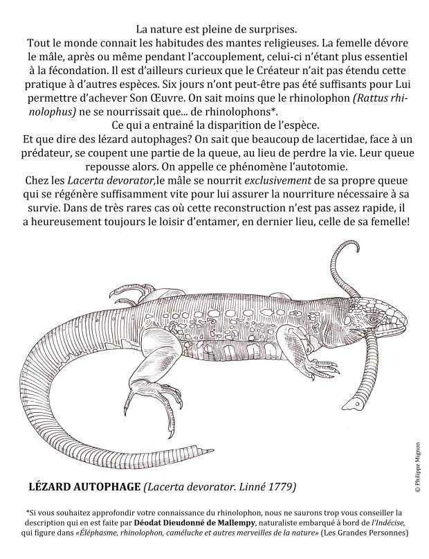Le lézard autophage © Philippe Mignon