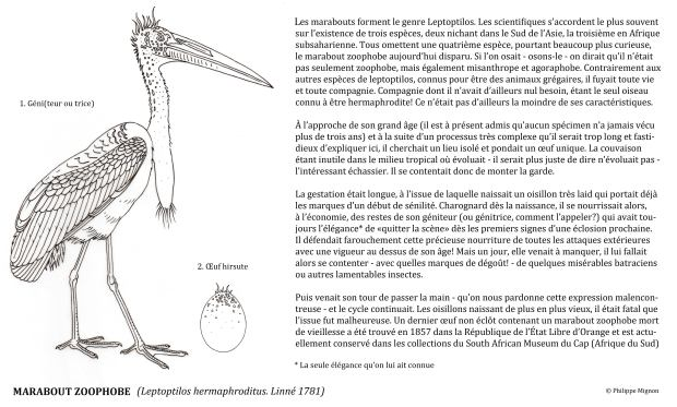 COLORIAGE - Le marabout zoophobe ©Philippe Mignon