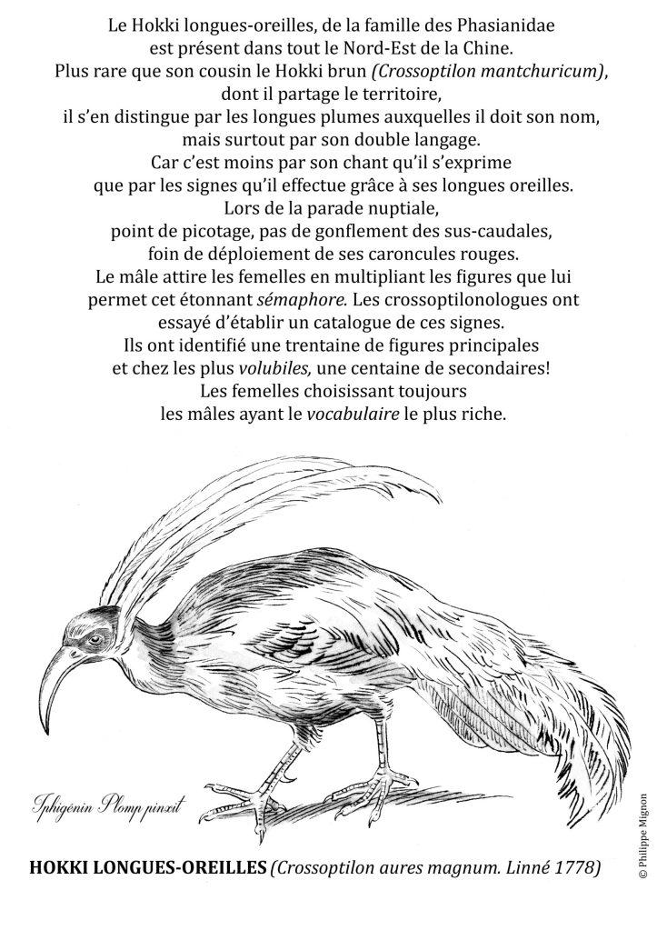 Coloriage - Le hokki longues-oreilles © Philippe Mignon