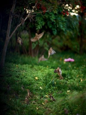 Terri Weifenbach - Des oiseaux, éditions Xavier Barral, 2019