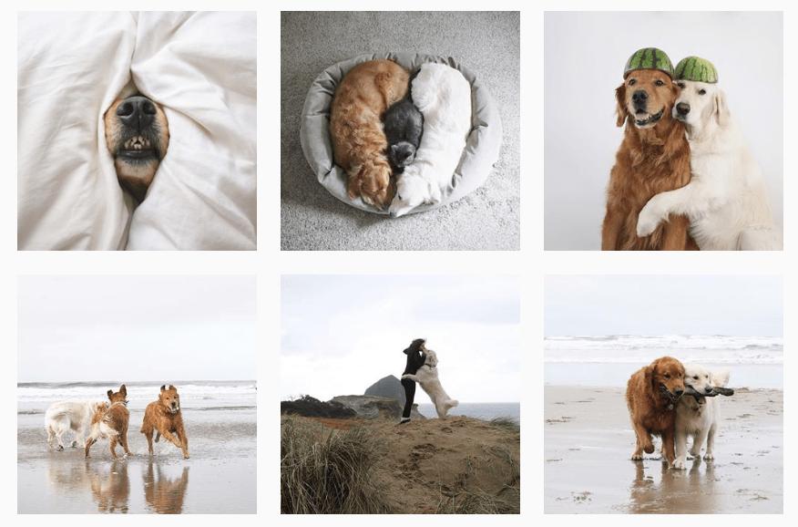 10 cachorros pra seguir no Instagram