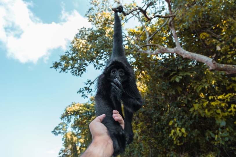 Segundo o índio, o nome do macaco é Leo e vive sempre ali. Apesar dele parecer pequeno, ele é quase do tamanho de uma pessoa.