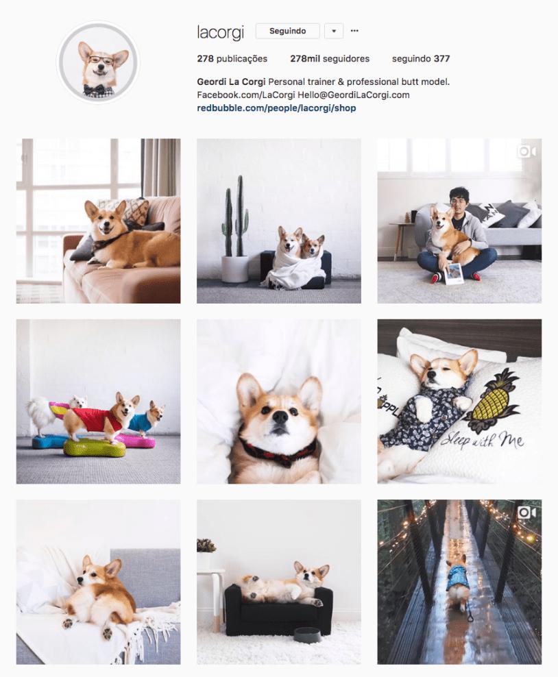 Cachorros para seguir no Instagram: la corgi. Por Delicia de Blog.
