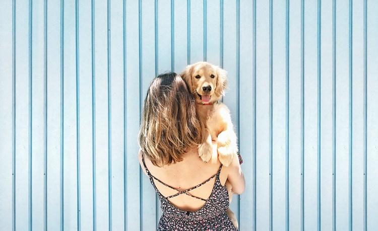 Como tirar fotos de cachorro