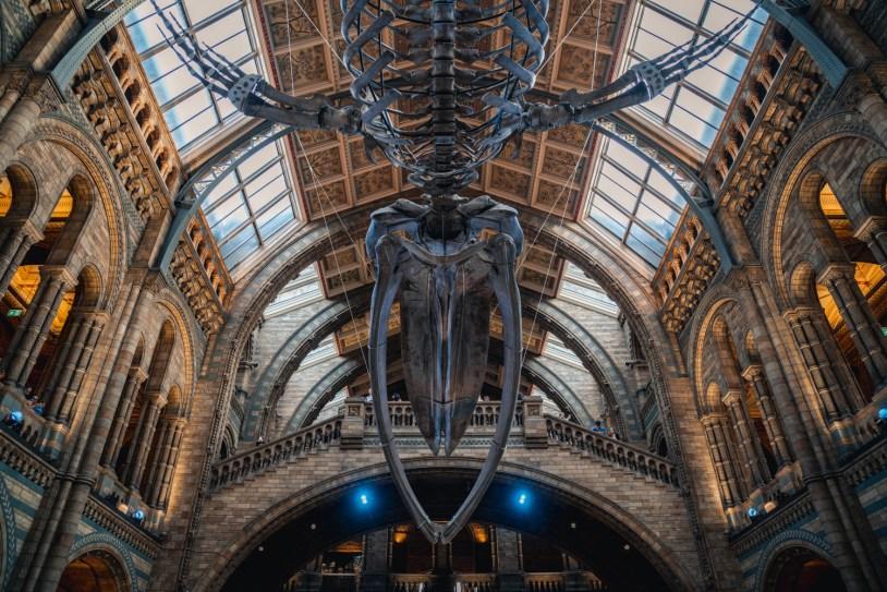 Os melhores museus de Londres: Museu de Historia Natural