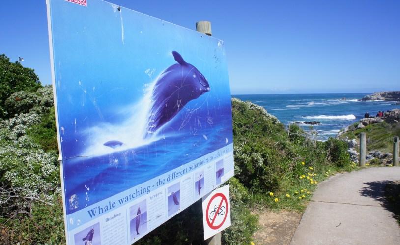 Placas informativas sobre baleias na trilha com vista panoramica de Hermanus, na Africa do Sul