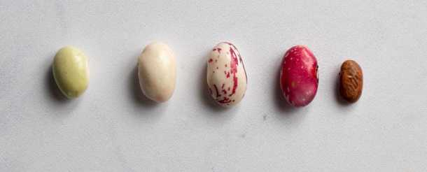 different stage of borlotti beans from immature to dried