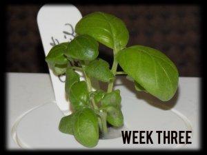 ClicknGrowweek3